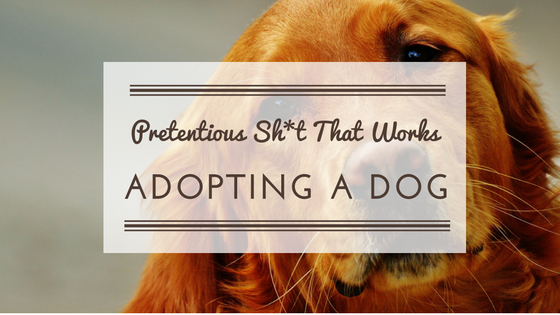 Pretentious Sh*t That Works: Adopting a Dog